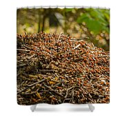 Anthill In Forest Shower Curtain