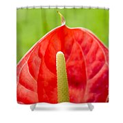 Anthurium Close-up Shower Curtain