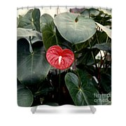 Anthurium Flower  Shower Curtain