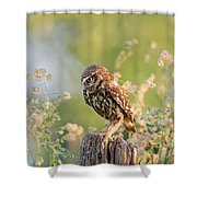 Anticipation - Little Owl Staring At Its Prey Shower Curtain