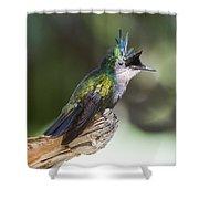 Antillean Crested Hummingbird On Stick Shower Curtain