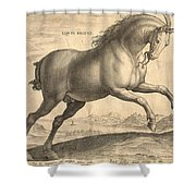 Antique Horse Engraving - Equus Regius Shower Curtain