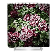 Antique Pink Roses Shower Curtain