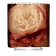 Antique Rose - In Full Bloom Shower Curtain