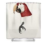 Antique Scarlet Macaw Illustration Shower Curtain