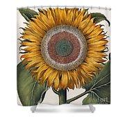 Antique Sunflower Print Shower Curtain