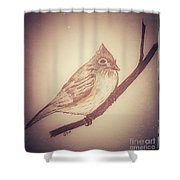 Antique Titmouse Shower Curtain by Ginny Youngblood