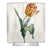 Antique Tulip Print Shower Curtain