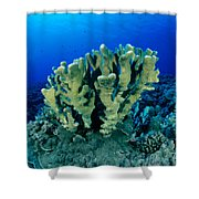 Antler Coral Shower Curtain