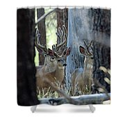 Antlers Galore Shower Curtain