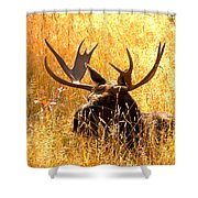 Antlers In The Golden Grass Shower Curtain