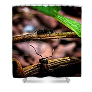 Ants Adventure Shower Curtain