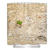 Ants At Oxtankah Shower Curtain