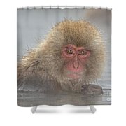 Anyone Looking Shower Curtain