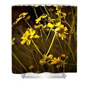 Anza Borrego Desert Sunflower 4 Shower Curtain