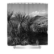 Anza-borrego Yuccas Shower Curtain