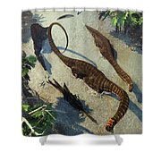 Apatosaurus From Above Shower Curtain