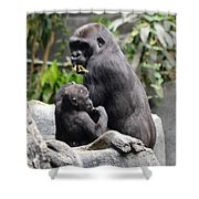 Apes Shower Curtain