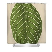Aphelandra Leopoldii  Shower Curtain