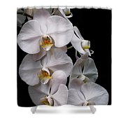 Aphrodite - White Orchid Shower Curtain