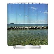 Apollo Beach Florida Shower Curtain