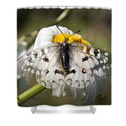Apollo Butterfly Shower Curtain