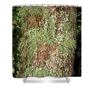 Appalachian Arbor Flora Shower Curtain