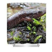 Appalachian Seal Salamander Shower Curtain