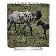 Appaloosa And Baby Shower Curtain