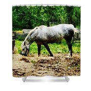 Appaloosa Eating Hay Shower Curtain