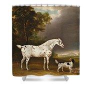 Appaloosa Horse And Spaniel Shower Curtain