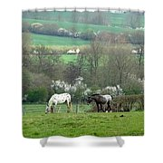 Appaloosa In May Shower Curtain