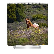Appaloosa Mustang Horse Shower Curtain
