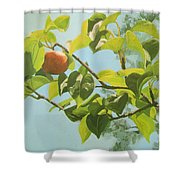 Apple A Day Shower Curtain
