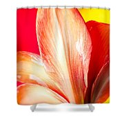 Apple Amaryllis Red Apple Amaryllis On A Pink And Yellow Background Shower Curtain