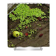 Apple And Algae In Dam Overflow Shower Curtain