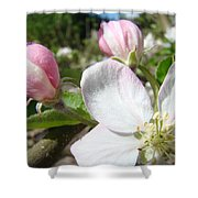 Apple Blossom Artwork Spring Apple Tree Baslee Troutman Shower Curtain