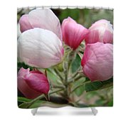 Apple Blossom Buds Art Prints Spring Blossoms Baslee Troutman Shower Curtain