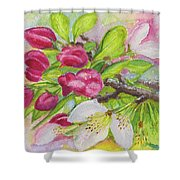 Apple Blossom Buds On A Greeting Card Shower Curtain