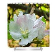 Apple Blossom Close-up Shower Curtain