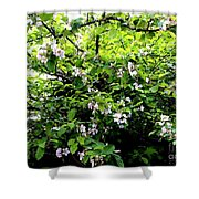 Apple Blossom Digital Painting Shower Curtain