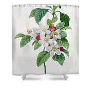 Apple Blossom Shower Curtain by Pierre Joseph Redoute