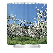 Apple Blossom Trees Norway Shower Curtain