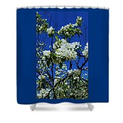 Apple Blossoms # 2 Shower Curtain