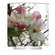 Apple Blossoms - Wild Apple Shower Curtain