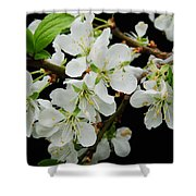Apple Blossoms 3 Shower Curtain
