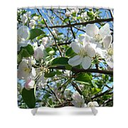 Apple Blossoms Art Prints 60 Spring Apple Tree Blossoms Blue Sky Landscape Shower Curtain
