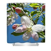 Apple Blossoms Art Prints Blue Sky Spring Baslee Troutman Shower Curtain