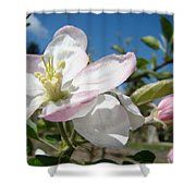 Apple Blossoms Art Prints Canvas Blue Sky Pink White Blossoms Shower Curtain