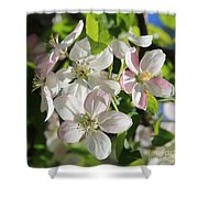 Apple Blossoms Square Shower Curtain